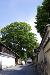2017_京都新緑_ねねの道