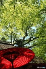 新緑の水谷茶屋