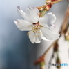 ひとめぐりの春