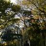 NIKON NIKON D610で撮影した(DSC_8138-1)の写真(画像)