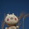 NIKON NIKON D610で撮影した(DSC_8433)の写真(画像)