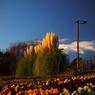OLYMPUS E-PM1で撮影した(P1012069)の写真(画像)