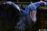 飛べ 魔鳥の翼よ