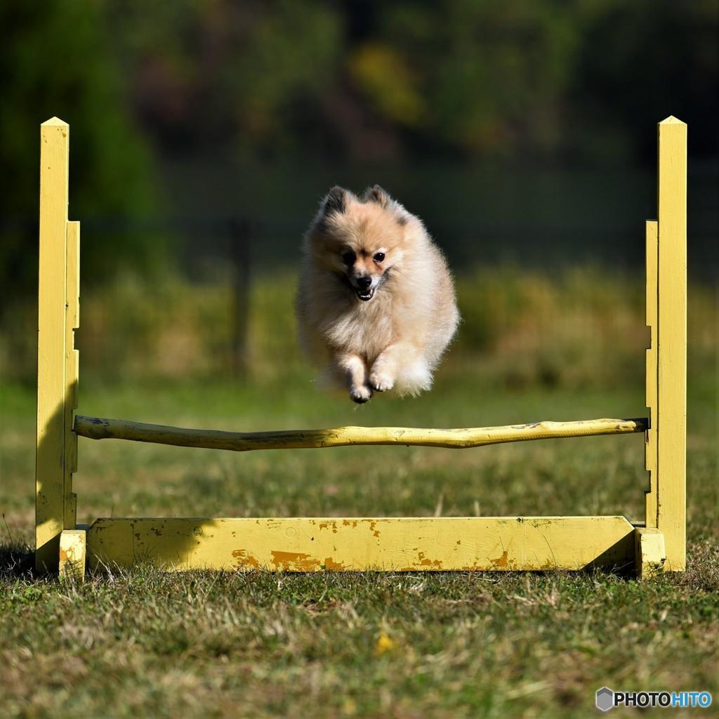 小太朗選手、jumping
