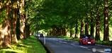 この道はローバーミニがよく似合う