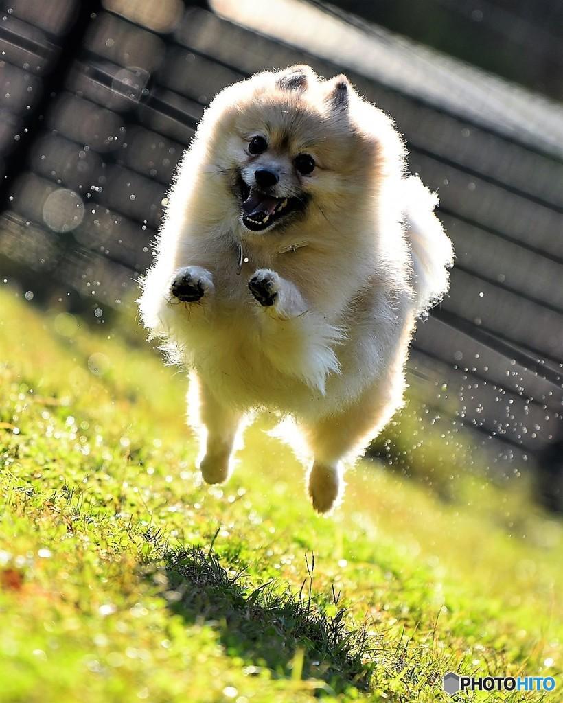 小太朗jumping(^^)