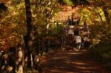 竜頭の滝遊歩道