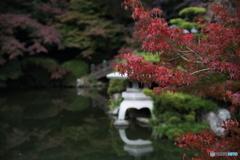 紅葉2016 下関 長府庭園 3