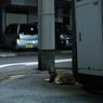 夜道に佇む猫