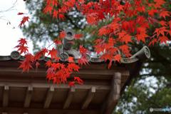 犬山寂光院の紅葉 2016