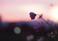 OLYMPUS E-M5で撮影した(黄昏)の写真(画像)