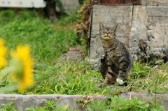 cat_102  ん〜もうちょい上?