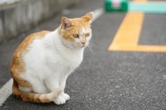 cat_130  駐車場にて