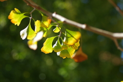 秋色の輝き
