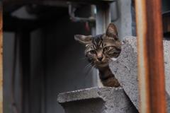 cat_48