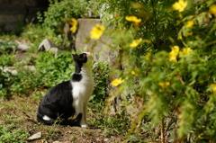 cat_103  空き地にて
