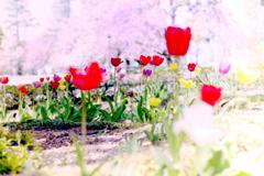 春_フィルムにて
