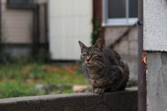 cat_44