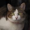 cat_24