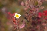 冬の花_2