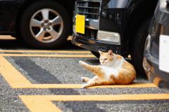 cat_131  駐車場にて