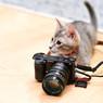 僕はカメラマン