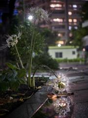 秋雨の日暮れ