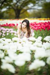 「Tulip Rainbow」