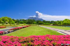 ツツジ咲く吉野公園と桜島