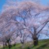 桜色舞うころ