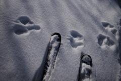 スキーと足跡
