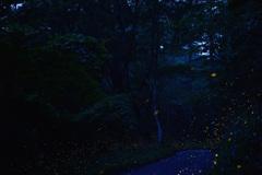 夕闇の林道