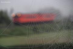 蜘蛛の巣とタラコ