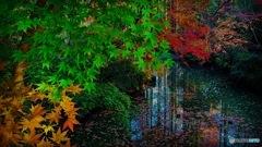 まだ紅葉見れました  生田緑地