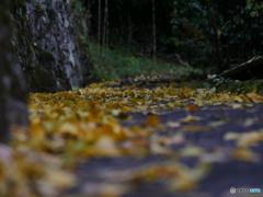 秋の小道①