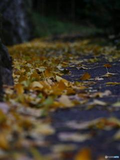秋の小道②