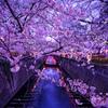 桜の舞のはじまり