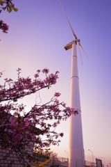 河津桜と風力発電