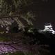 犬山城 夜