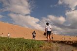 砂丘のオアシス