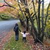 姉妹怪獣の紅葉狩り