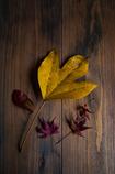 a little autumn...