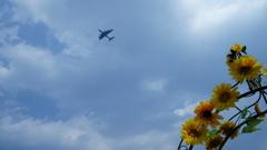 飛行機とトンボ(?)が出迎え?