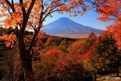 秋深し、彩りの木々と…。
