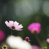 秋かな(お花の時間)