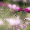 こんな小春日和の穏やかな日は(お花の時間)