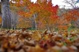おっ、そろそろ秋だなっ