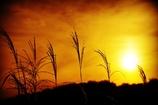 昔々の夕陽