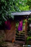 明月院Collection2017-紫-