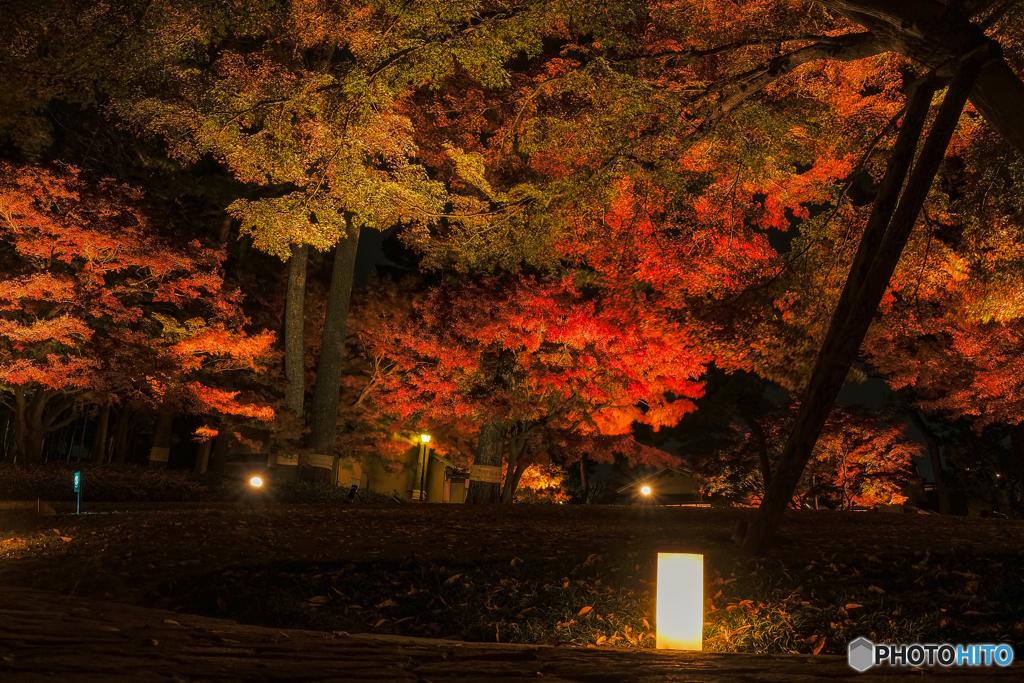 大田黒公園-紅葉ライトアップ2018④